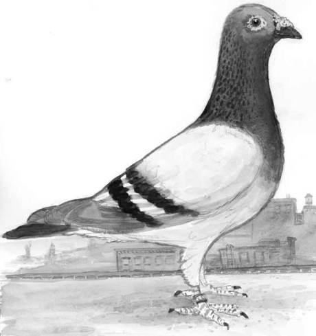 Pigeon Sketch, watercolor © 2010 K. McCloskey