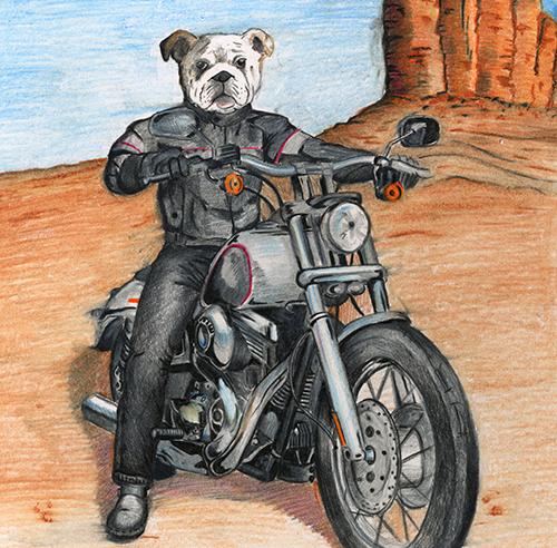 Bulldog motorcyclist © Christian Debuque